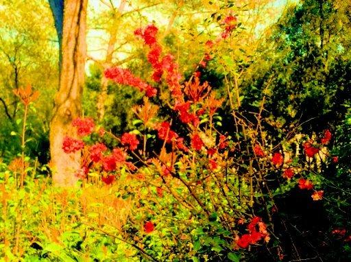 Le printemps à Isthmia