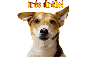 GIF TRES DROLE CHIEN